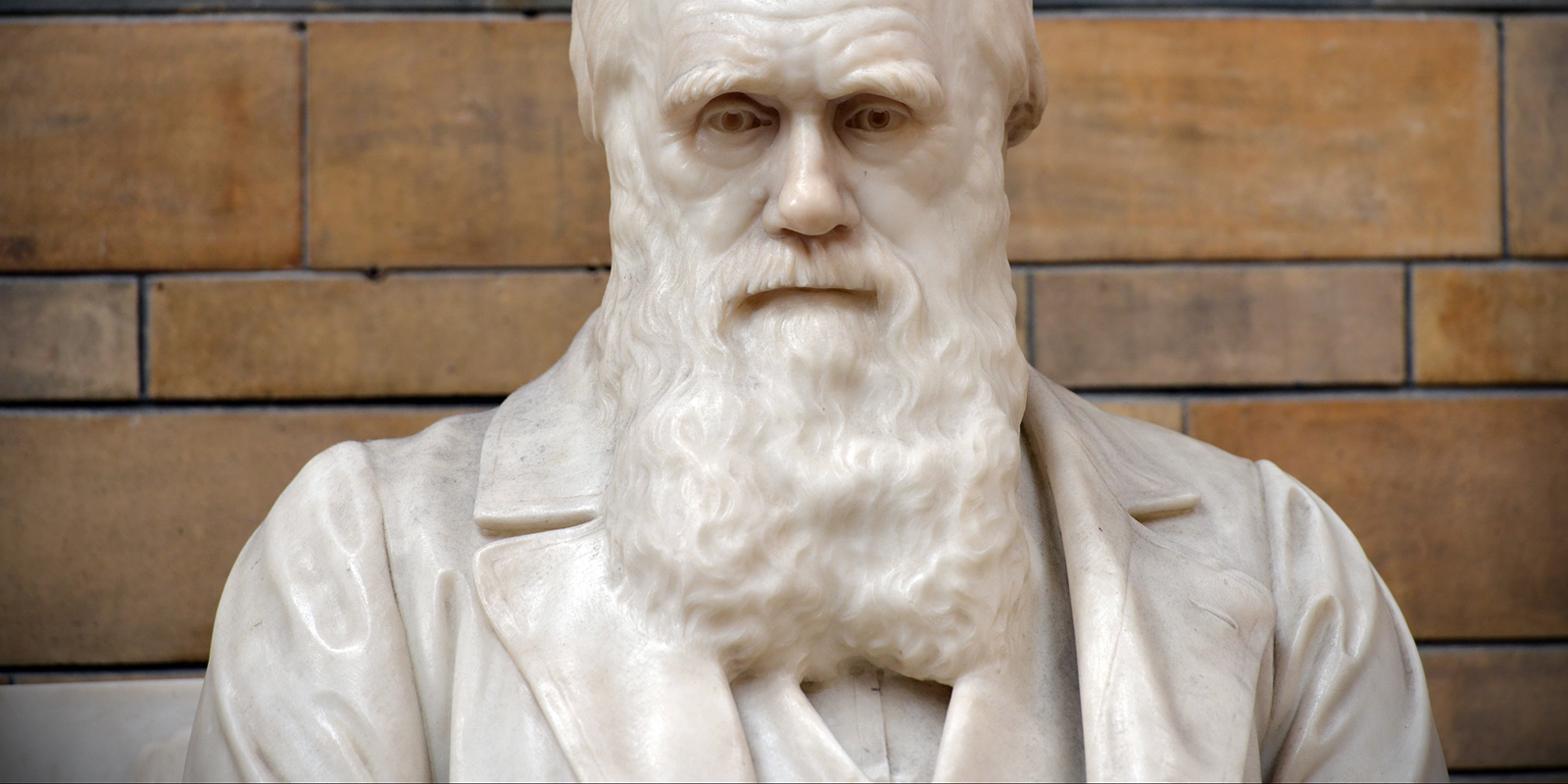 Imagery for Darwin and an evolution in price discrimination